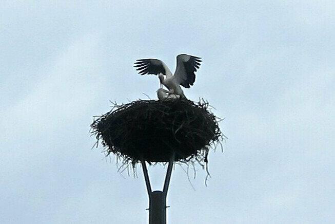 Nest Fritz I