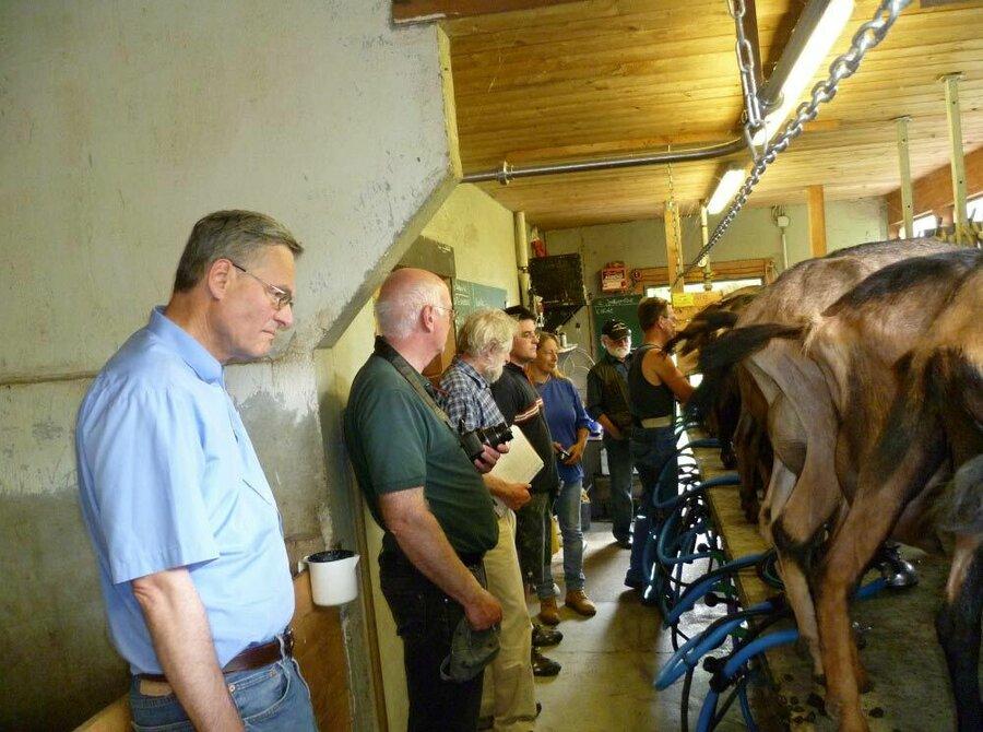 Praxisnah konnte die Melkbarkeit der beurteilten Ziegen und deren Euter im Melkstand nachvollzogen werden.