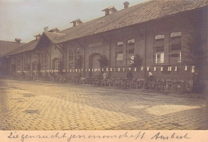 Ziegenschau, Ansbach 1911