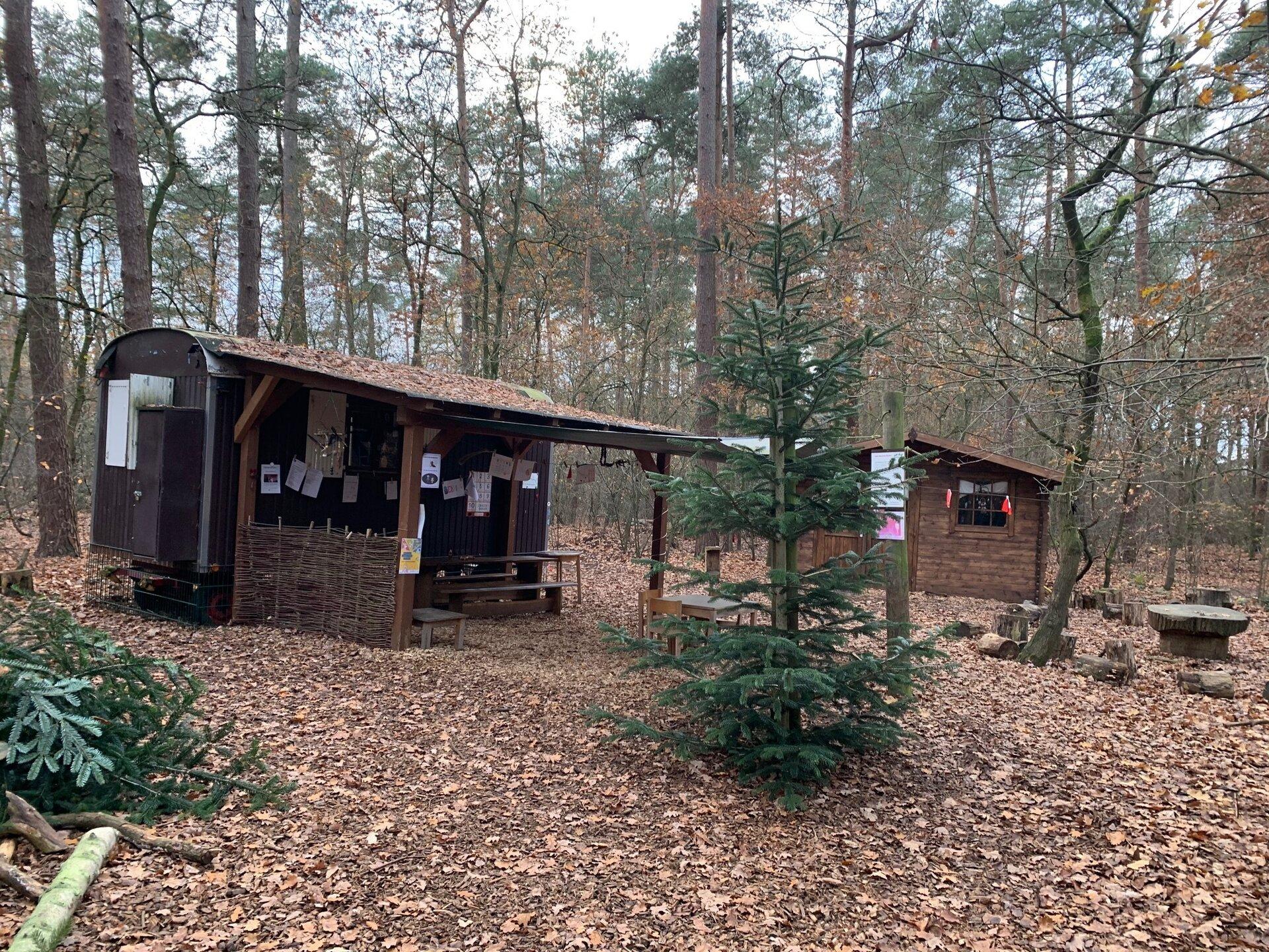 Weihnachtszeit im Wald
