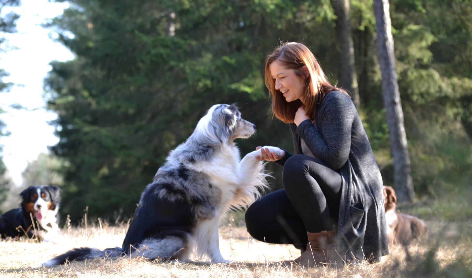 Hund Mensch Miteinander