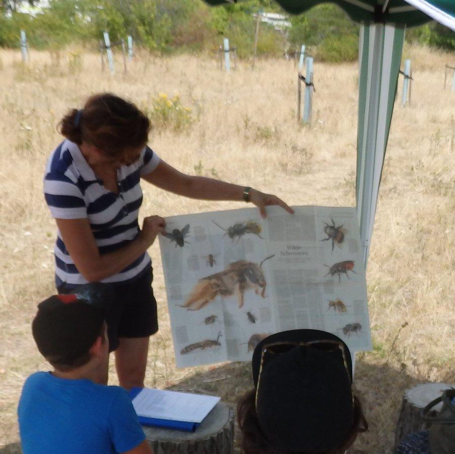 Einführung zum Thema Wildbienen