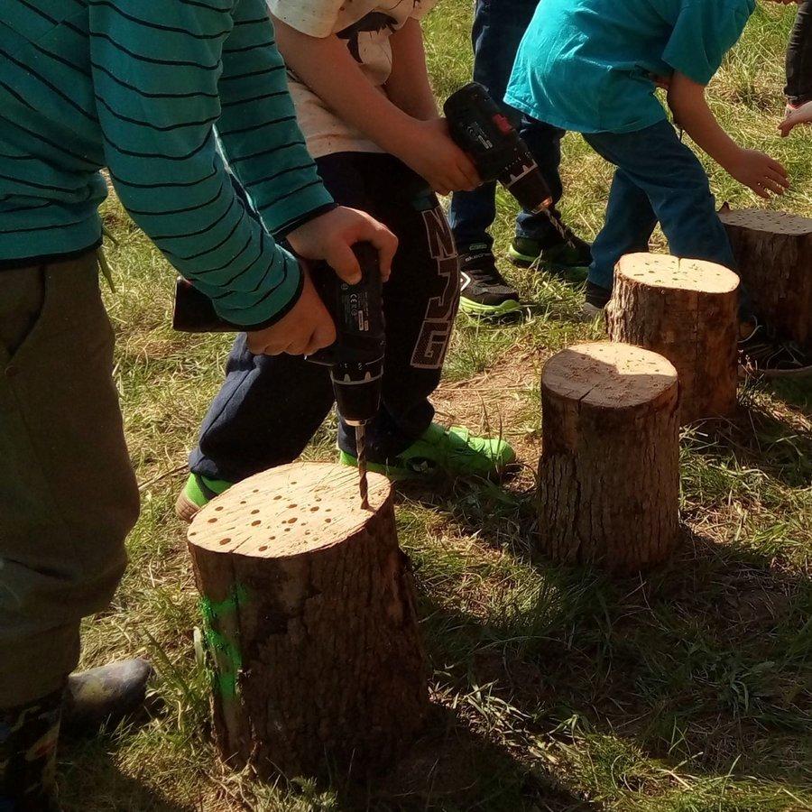 Kinder bohren Brutgänge für Wildbienen