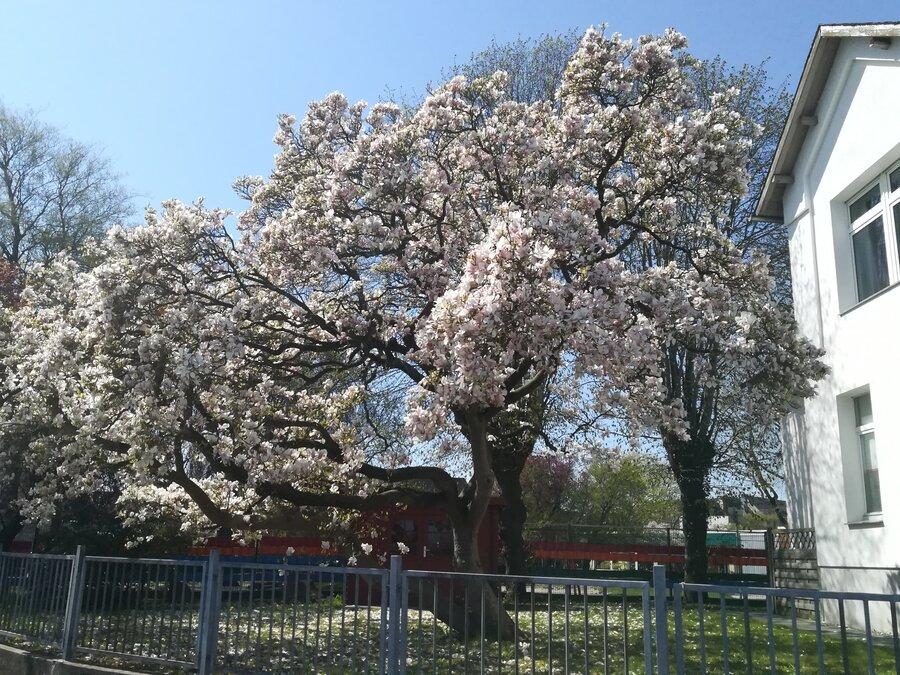 Praxis im Frühling (04/2019)