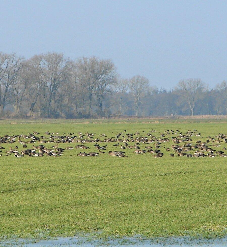 Lewitz-Europäisches Vogelschutzgebiet