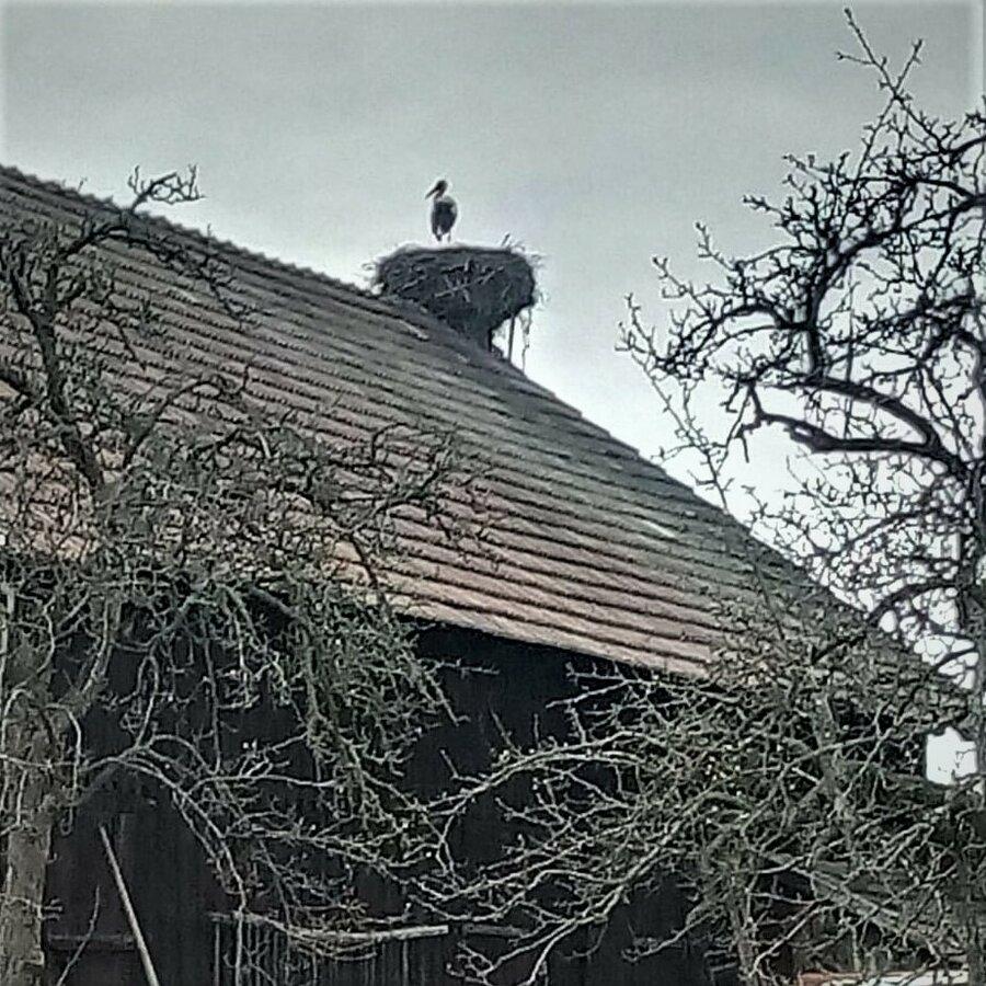 Nest  Günther
