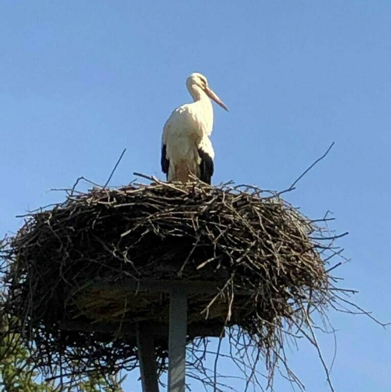 Nest Andreas