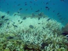 coralbleaching