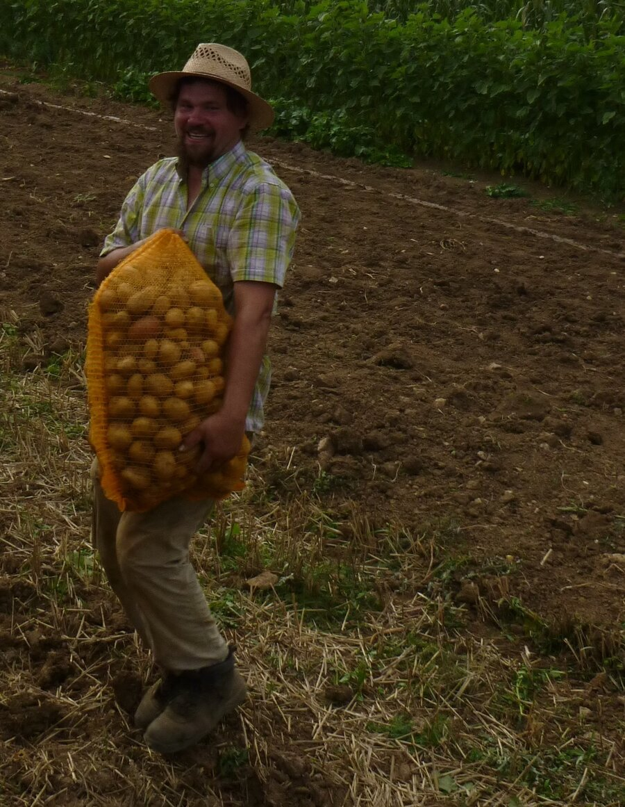 Verkauf-_Kartoffeln