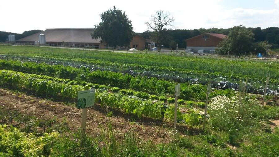 Was_wir_tun-_Solidarische_Landwirtschaft_2