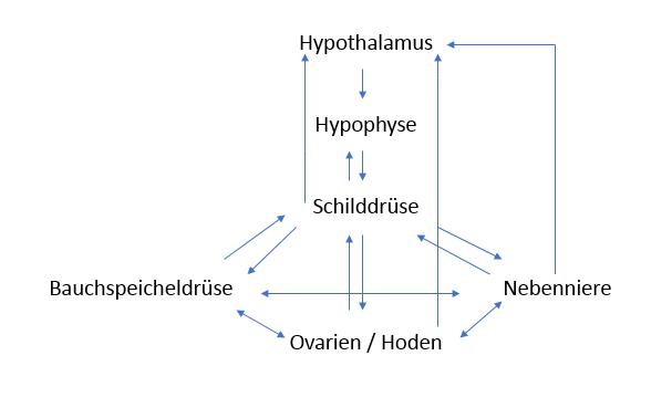 Hormonsynthese