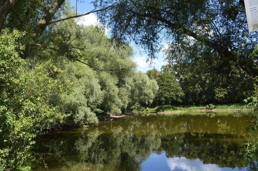 Der geschützte Lindenweiher liegt versteckt im Wohngebiet Fiinkenkrug. Ein Verein kümmert sich um den Erhalt, den Schutz und die Renaturierung.