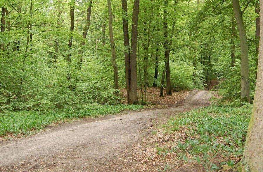 Im Bredower Forst gab es den ersten Naturlehrpfad Deutschlands