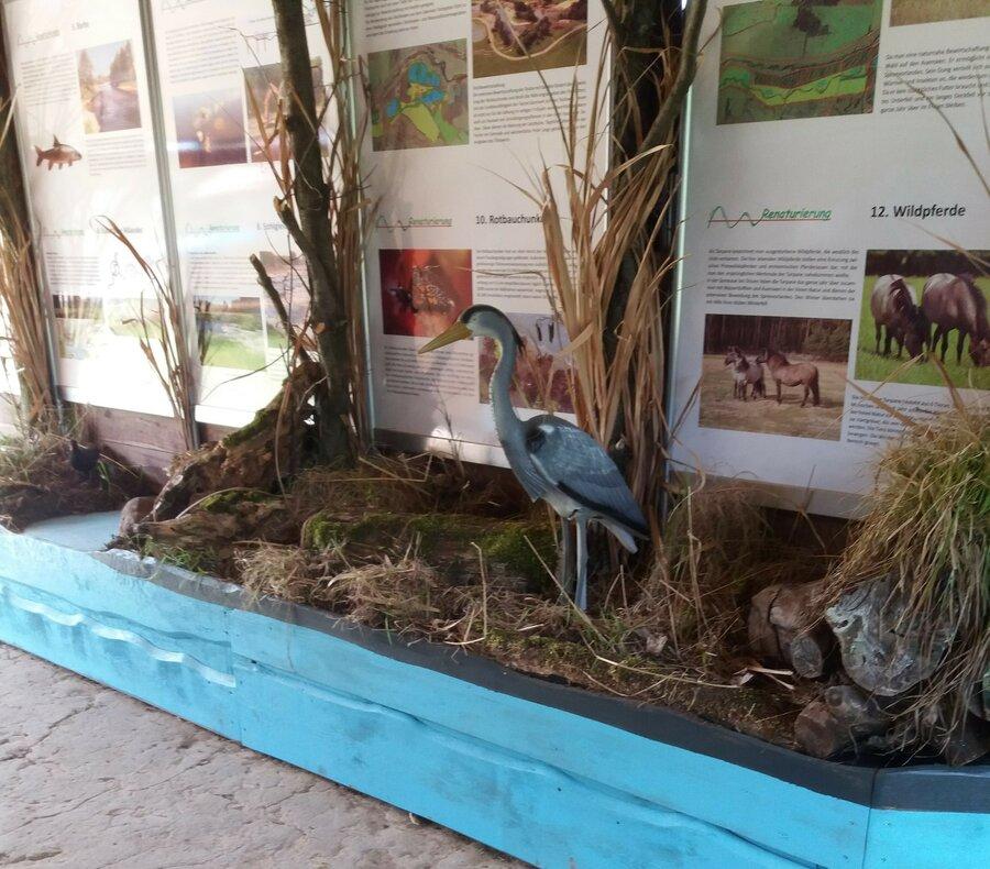 Ausstellung renaturierte Spreeaue