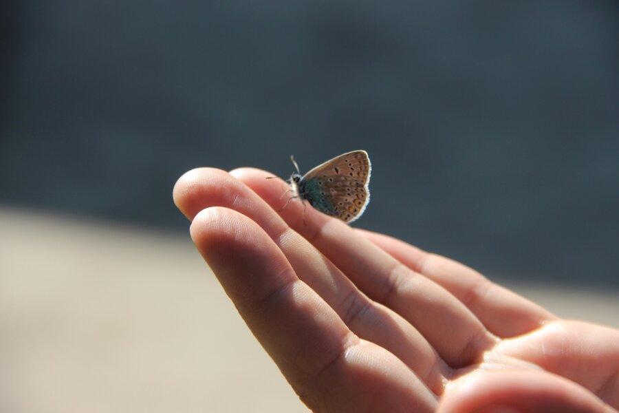 Schmetterling_Bl_uling_auf_der_Hand_1.6.19_Berlin_Tempelhof_Matthias_Brocke_1_