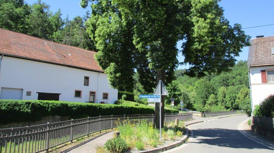 Jeckenbach Bypasslinde