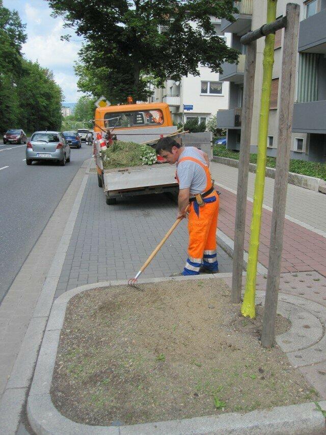 Pflege einer Baumscheibe im Begleitgrün