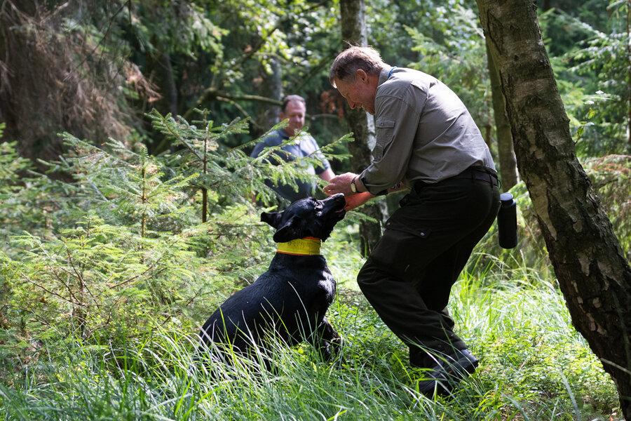 Jürgen Fischer mit seinem Labradorrüden. Der Hund zeigt dem Führer den Fund des Schwarzwildes an. Foto: Sebastian Grell