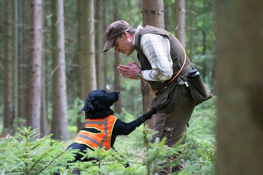 Dirk Gerstenkorn mit seiner Labradorhündin. Die Hündin zeigt dem Führer den Fund des Schwarzwildes an. Foto: Sebastian Grell