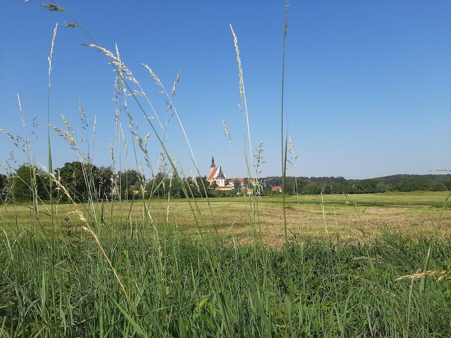 Oderwiesen mit Blick auf Kloster Neuzelle Foto: Besucherinformation Neuzelle