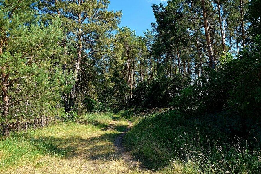 Wälder in unmittelbarer Umgebung der Kita