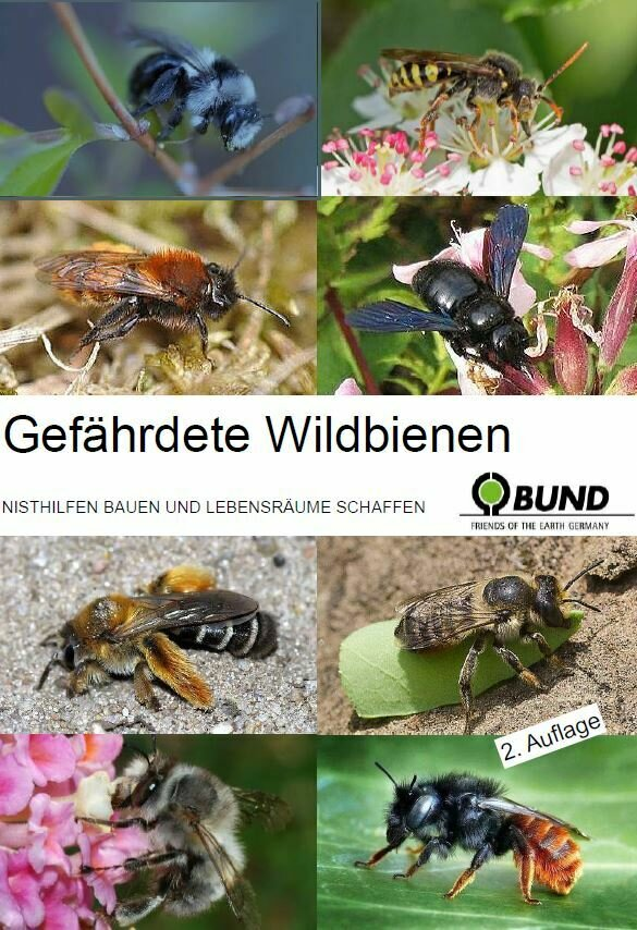 Gefährdete Wildbienen
