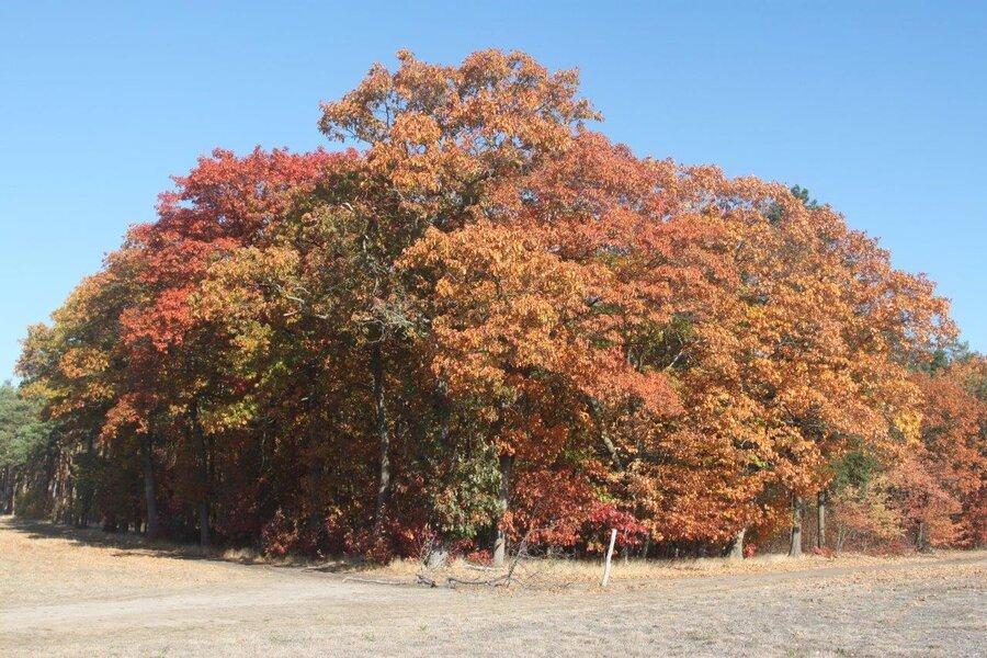 Nebelin im Herbst