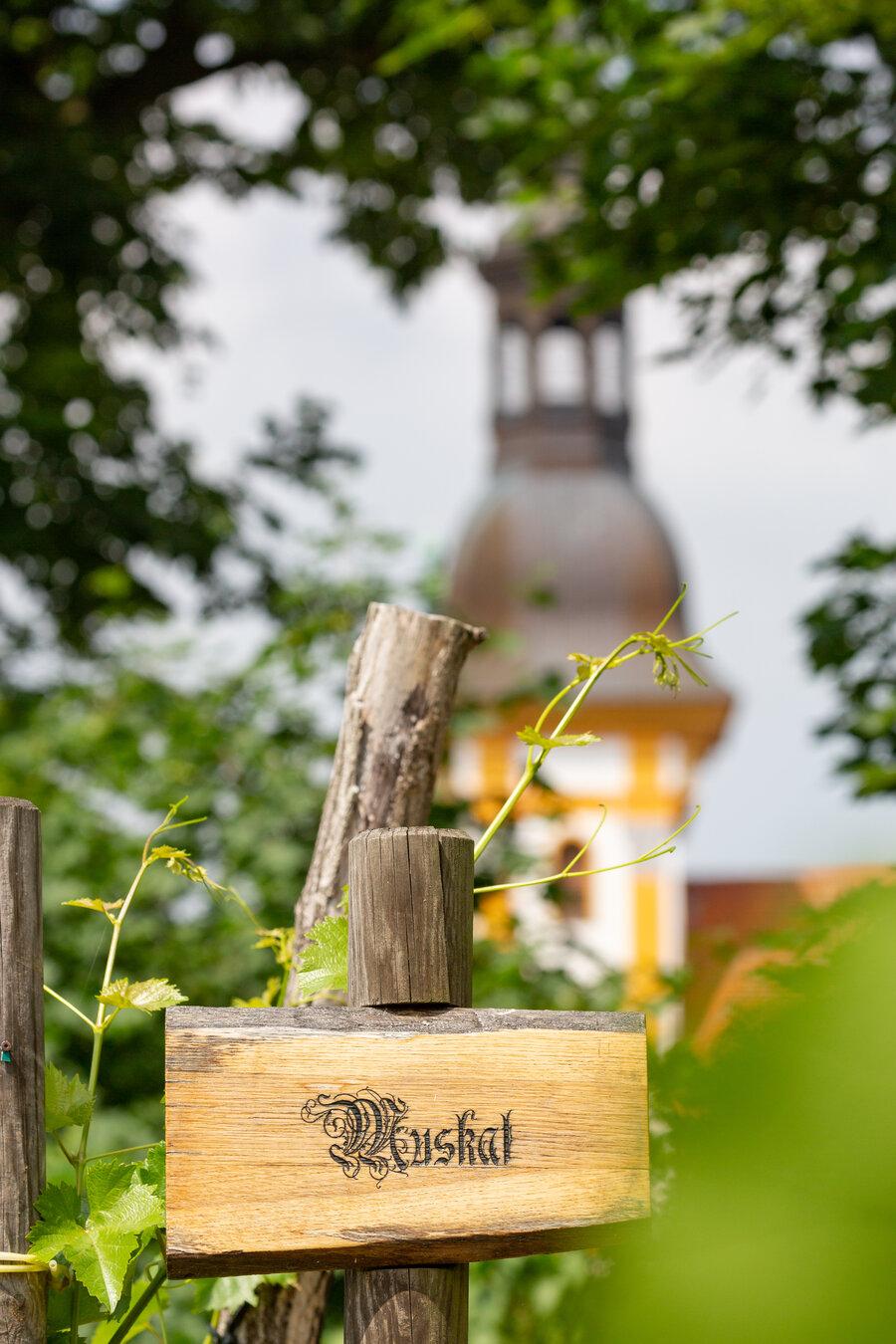 Weinberg Kloster Neuzelle - Fotograf Seeland Oder-Spree/ Florian Läufer