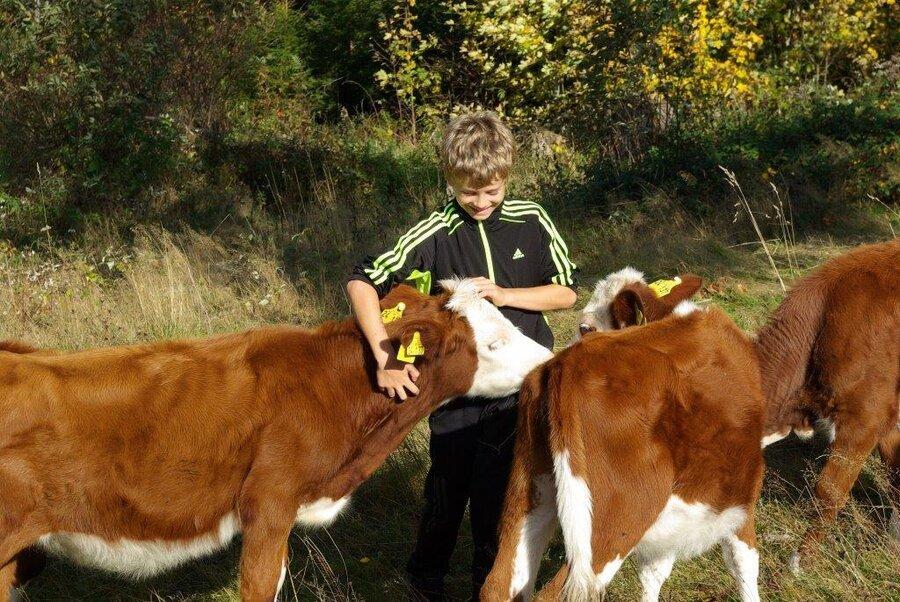 Junge mit Kühen