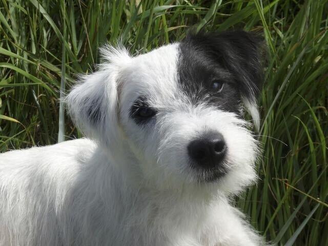 Der süße Hund von Florin und Co.