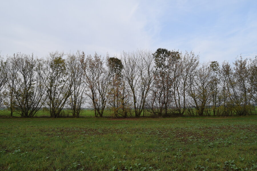 Hecken als potentielle Brutbäume (Foto: P. Solluntsch)
