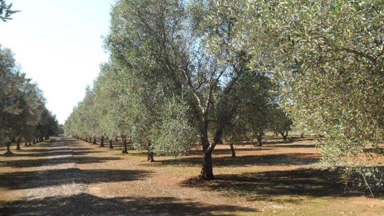 Grundstück Schiavoni 7