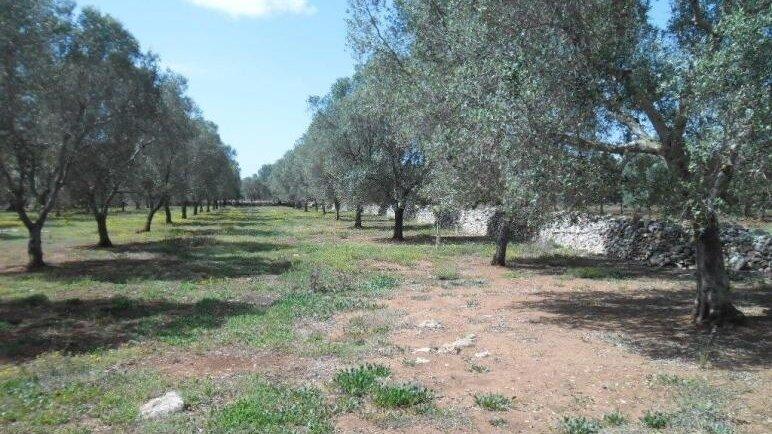 Grundstück Schiavoni 4