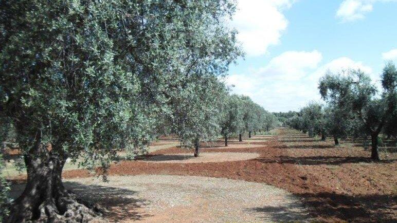 Grundstück Schiavoni 1