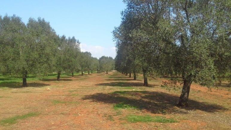 Grundstück Schiavoni