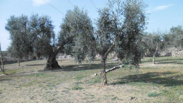 Grundstück Gioia