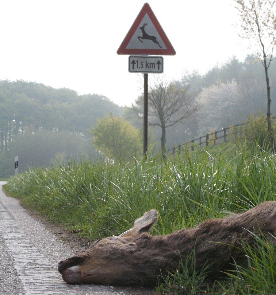 Wildunfall Quelle: Börner/DJV
