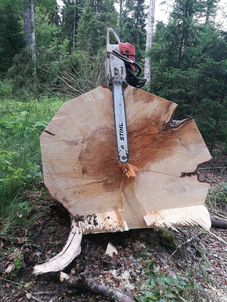 gefällter Baum