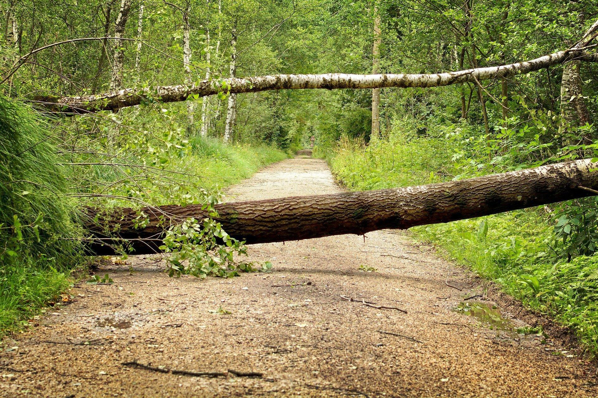 Zwei umgefallene Bäume auf einem Waldweg