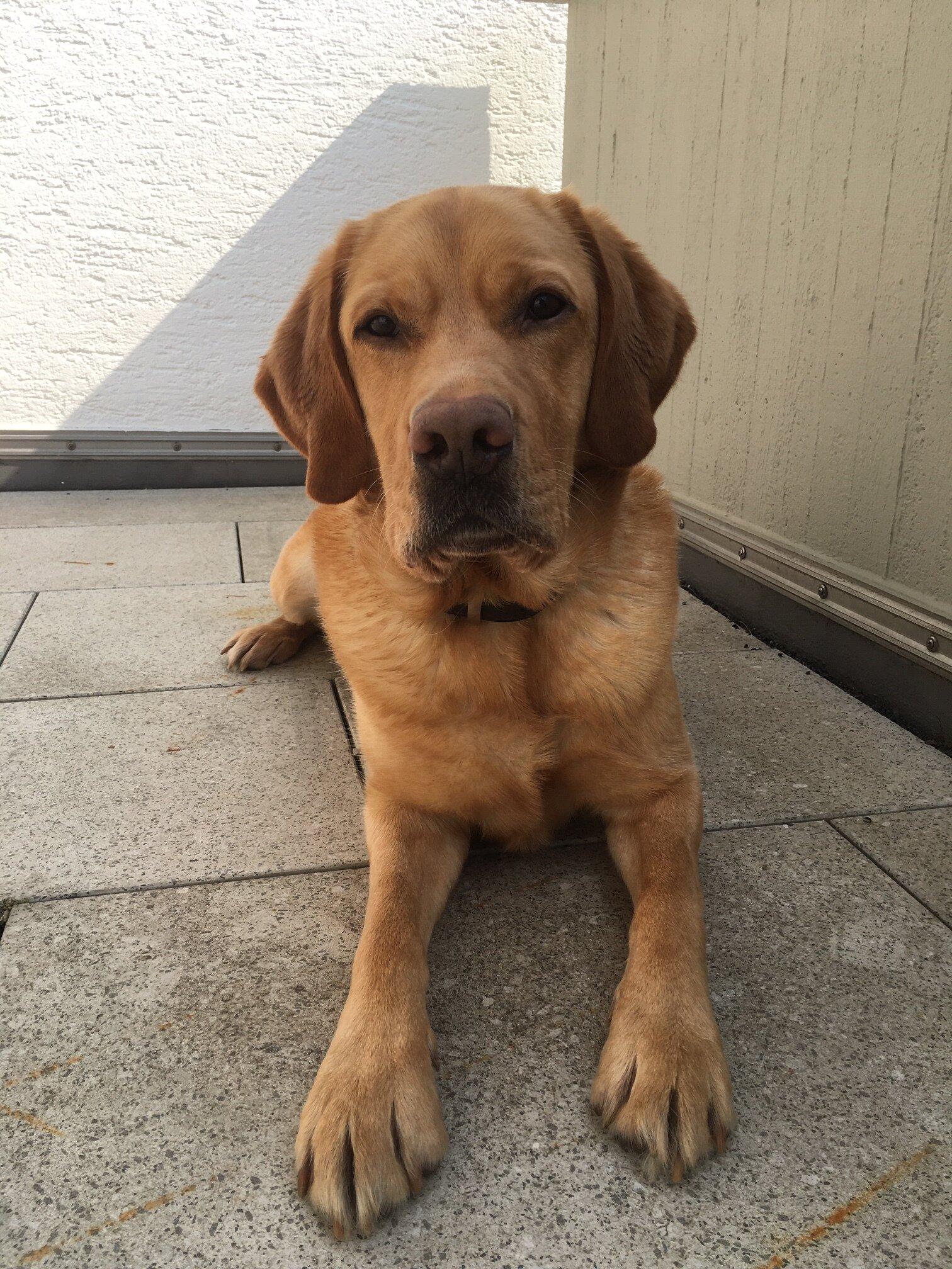 Klassenhund Luke