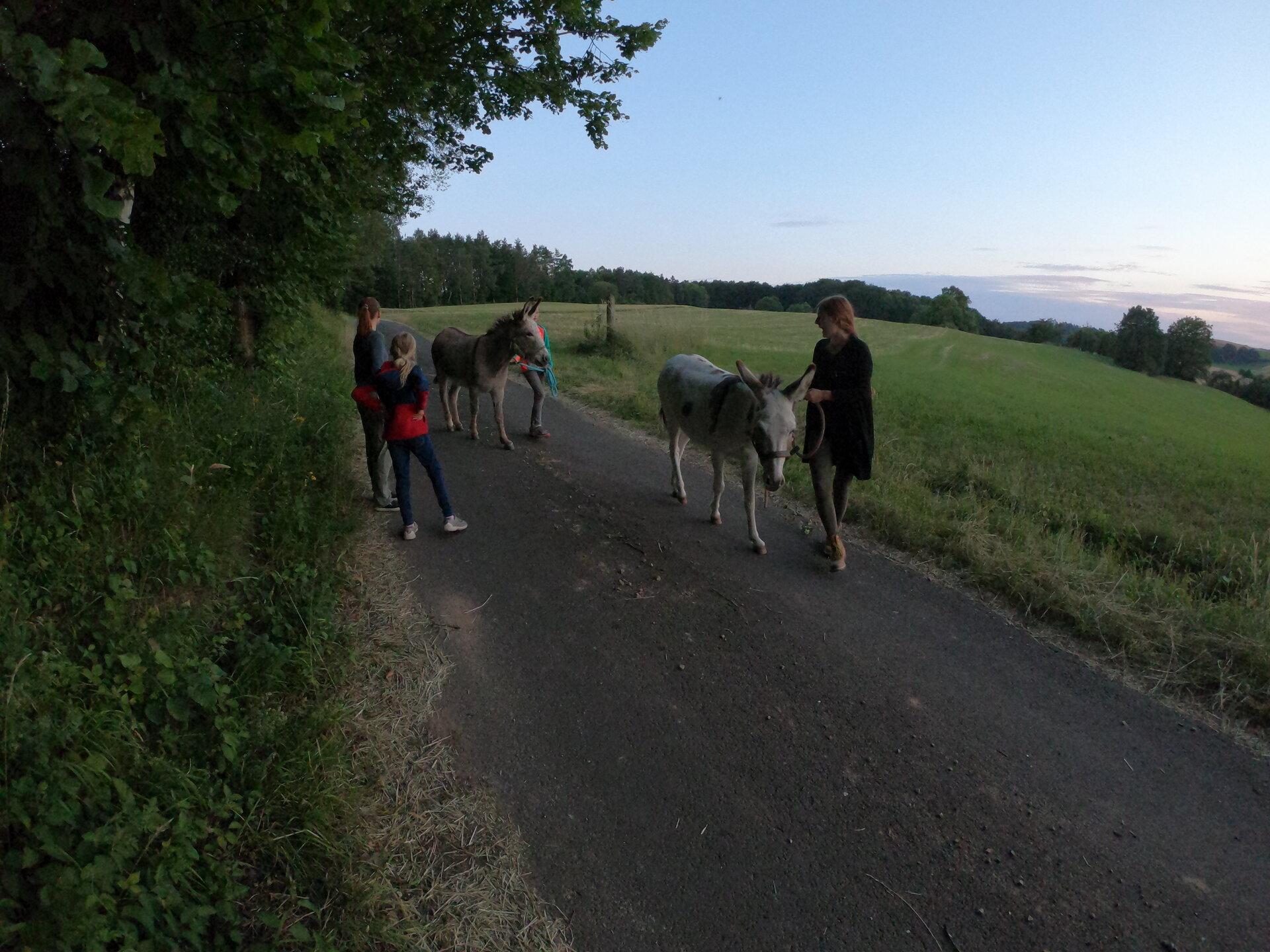 Kräuterwanderung mit Esel