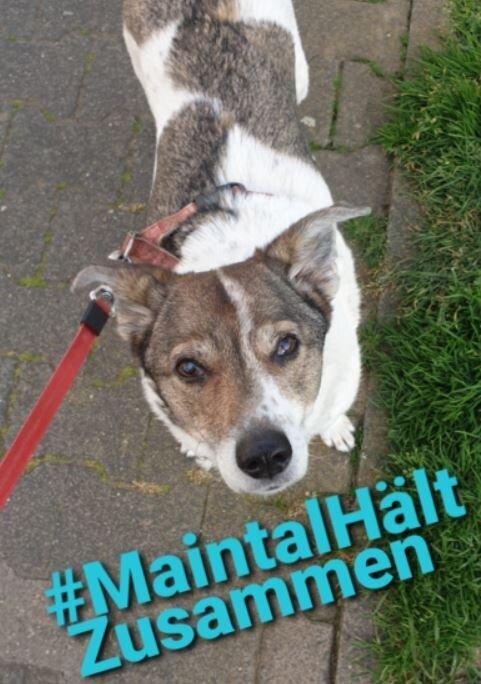 Bild zeigt einen Hund; Foto: Lisa Hagedorn