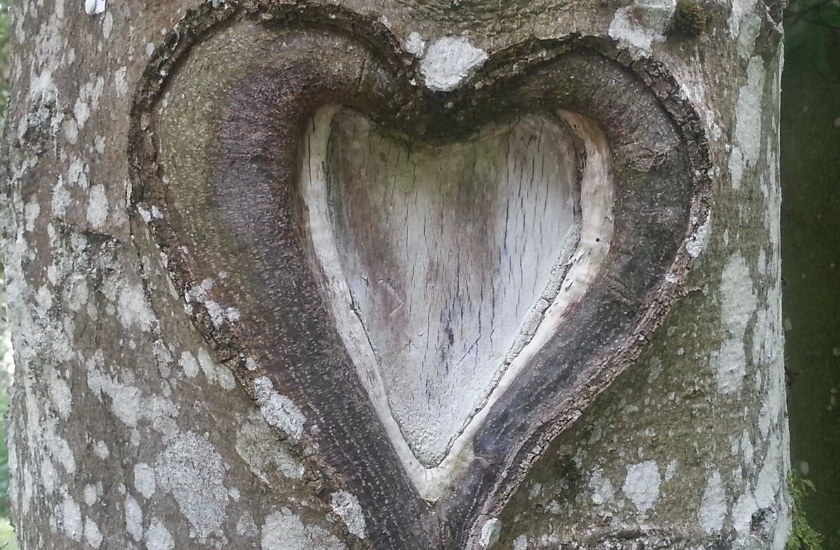 Foto: pixabay; Bild zeigt Baumstamm mit Herz