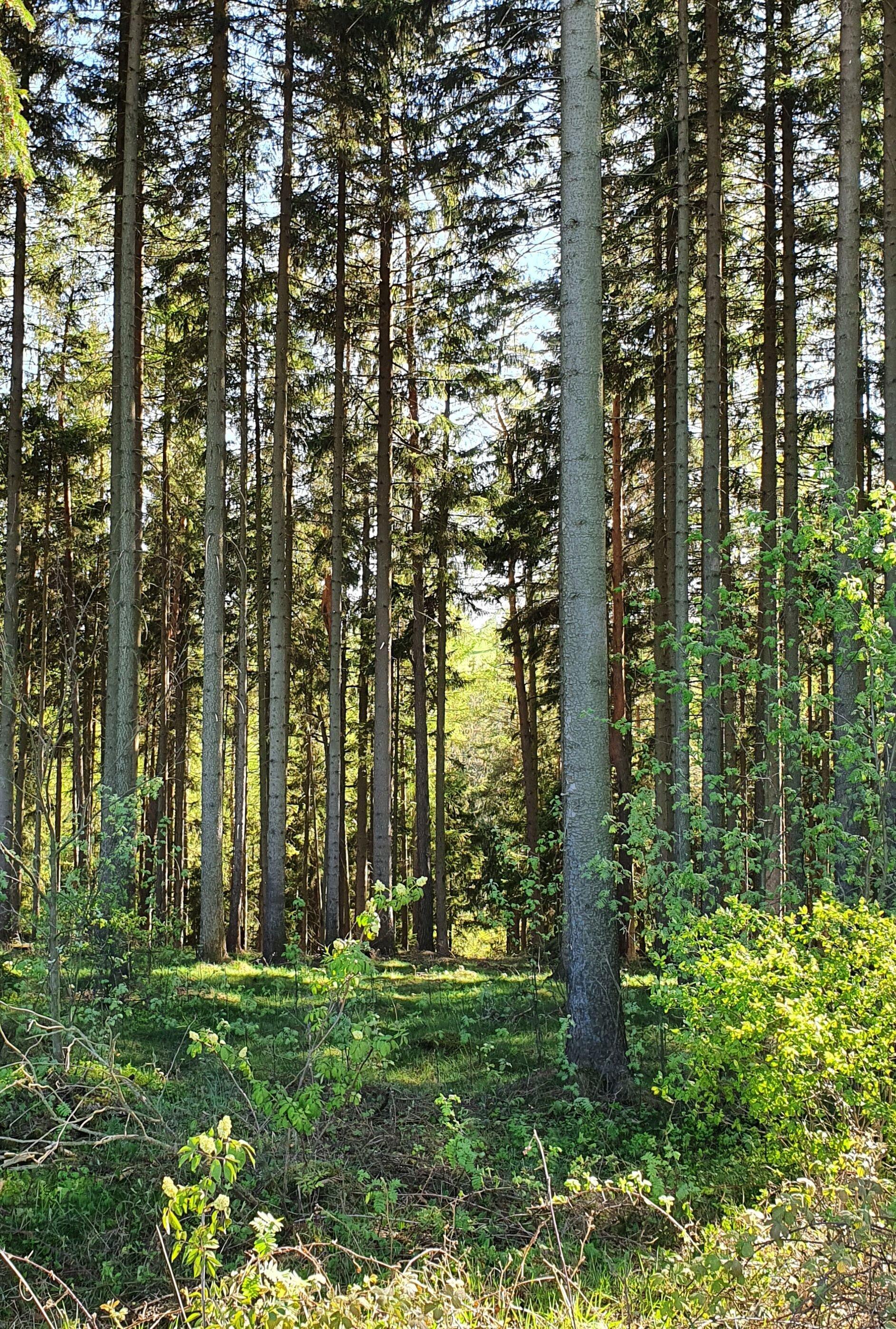 Wald bei Friedersdorf
