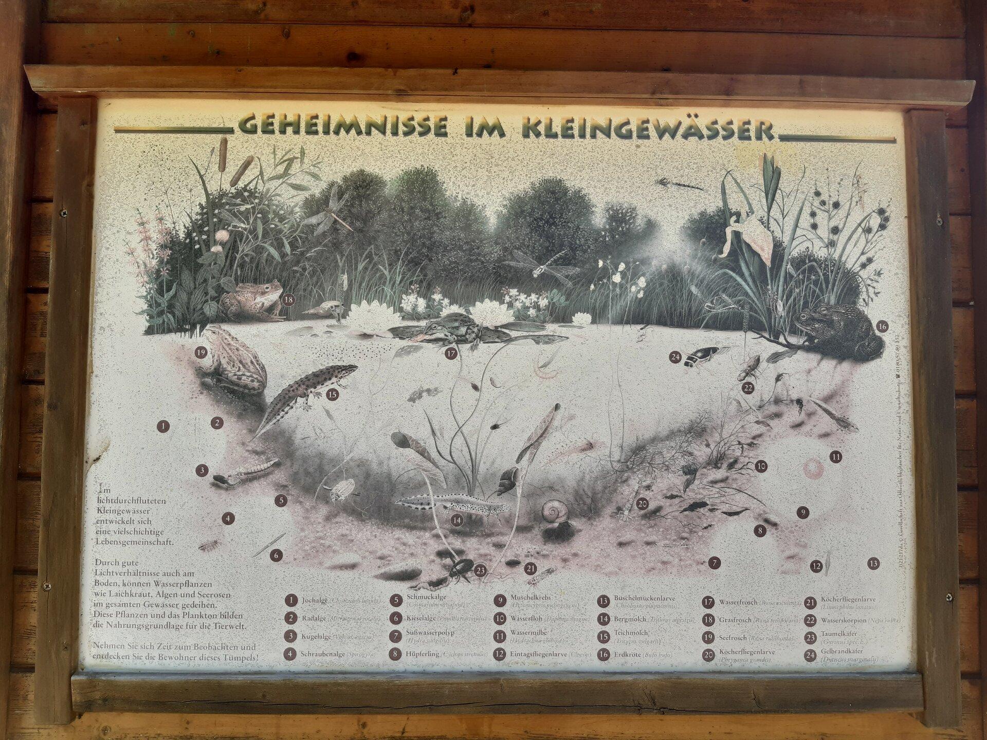 Waldforum
