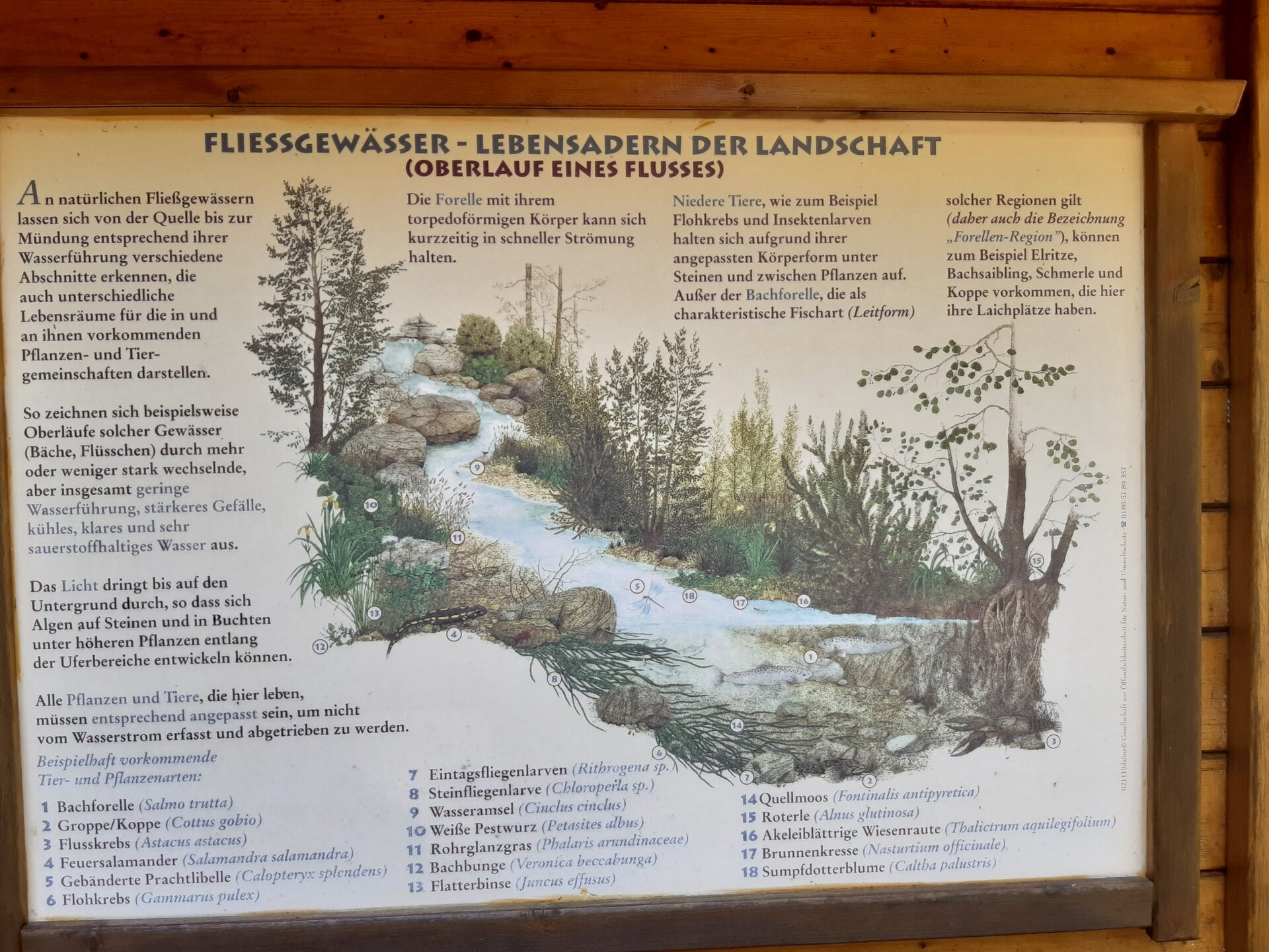 Waldforum Roskerbach Lerntafel Fließgewässer