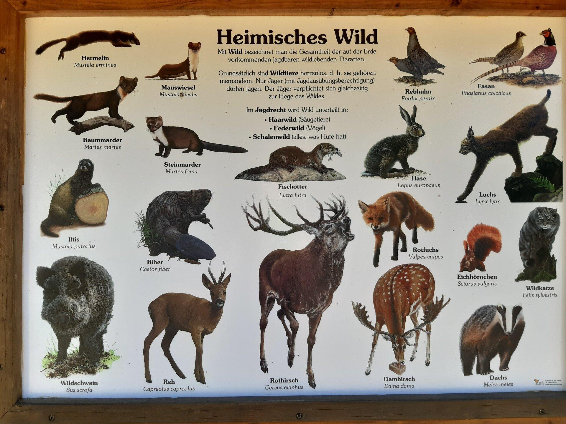 Waldforum Roskerbach Lerntafel heimisches Wild