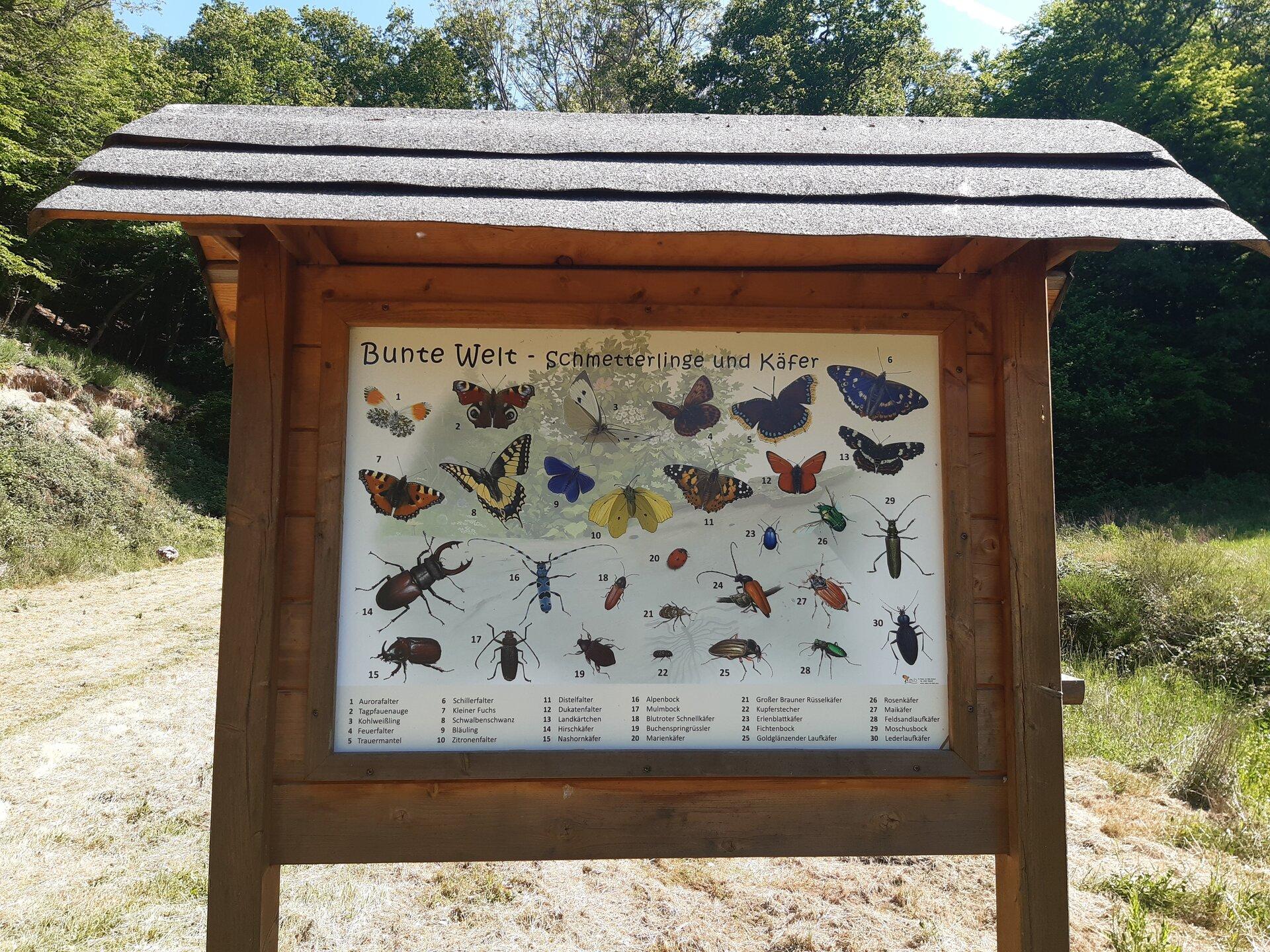 Waldforum Roskerbach Lerntafel Schmetterlinge und Käfer