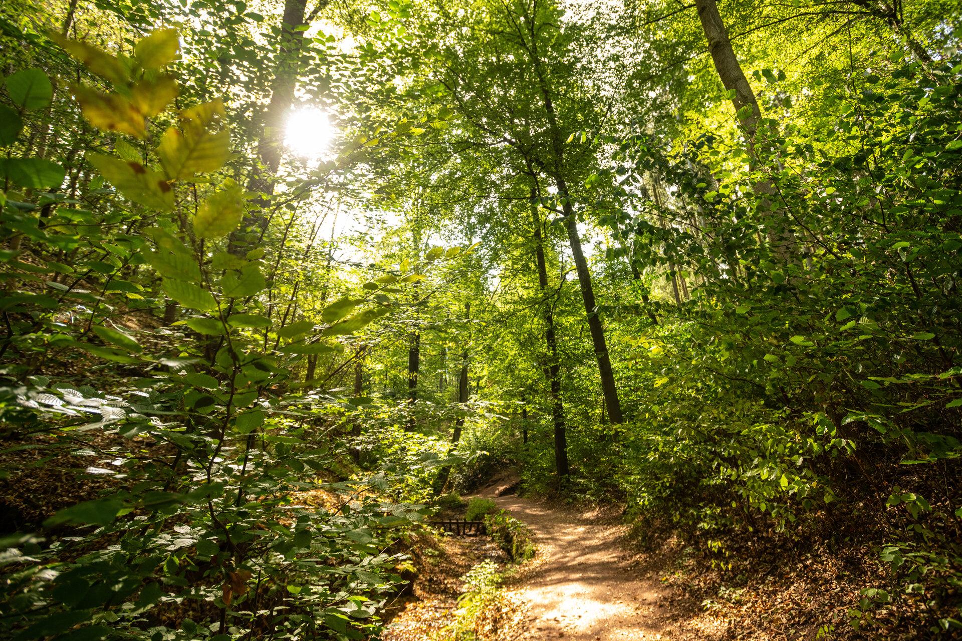 Thüringer Wald bei Eisenach (Dominik Ketz)