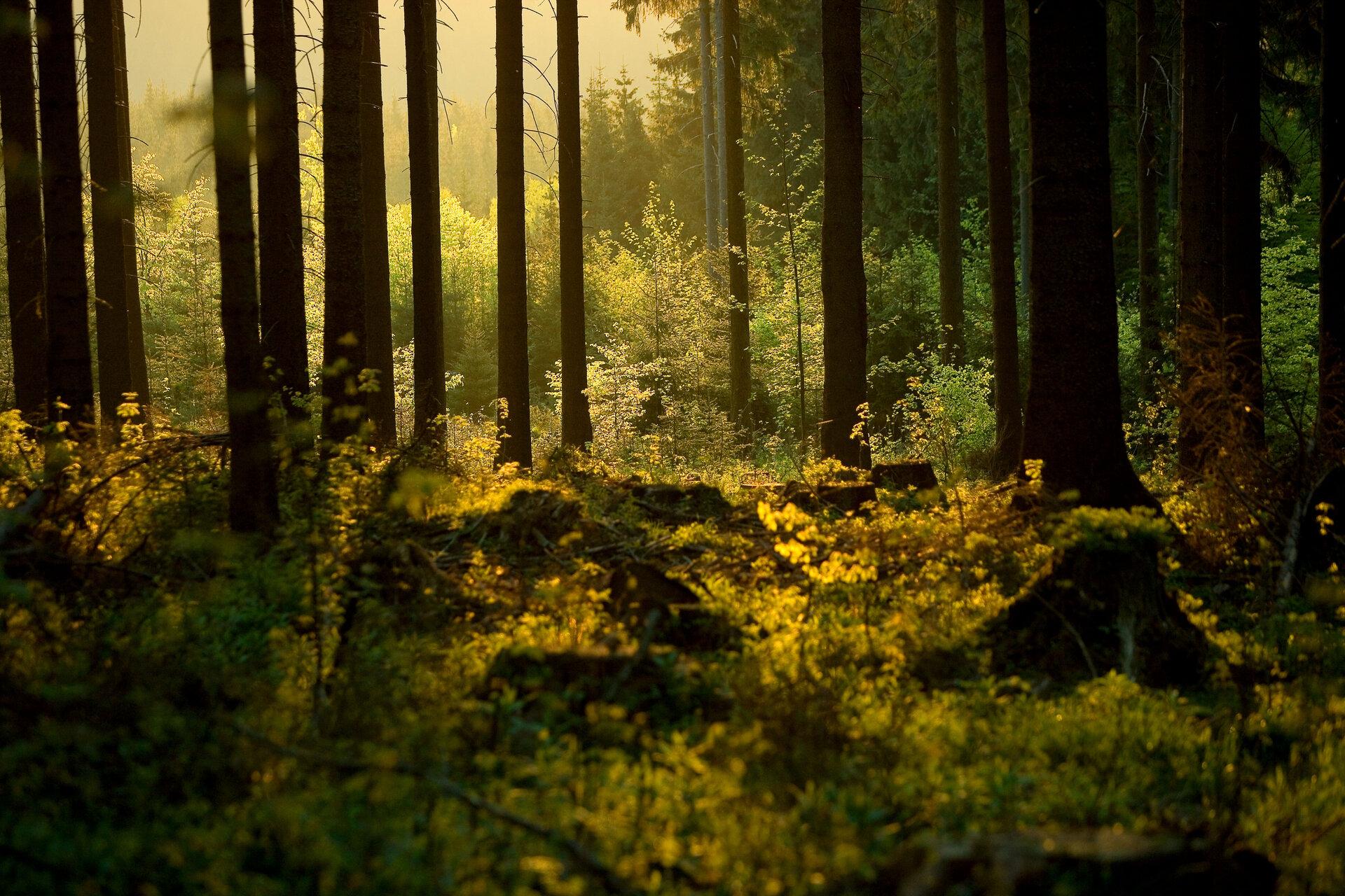 Thüringer Wald (Matthias Kaiser)